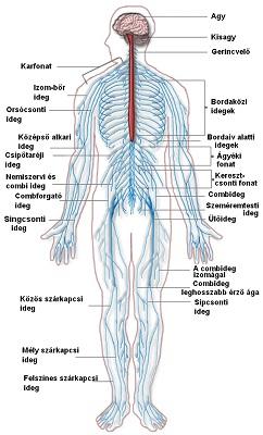 hogyan lehet gyógyítani az ideg pikkelysömörét