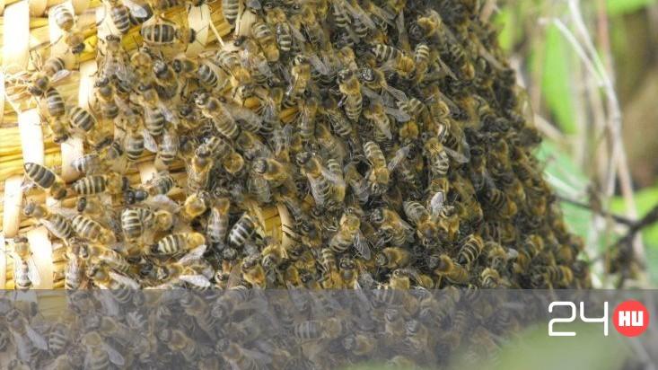 pikkelysömör kezelése méhekkel folt a vörös pontok bőrén